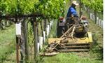 Mowers & Cultivators for Vineyards, Orchards & Wildlife Plots
