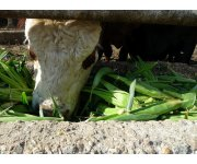 Monitoring cow nutrition