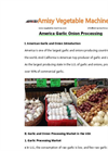 America Garlic Onion Processing