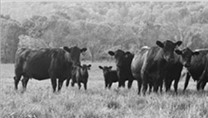 Beef Industry Research Services