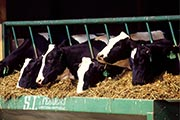 Latest FAR Module gives practical advice to reduce livestock emissions