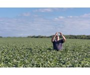 Bred to Perform, High Oleic Soybeans Provide Proven Genetics