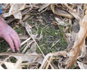 Why You Should Consider Cover Crops for Your Farm