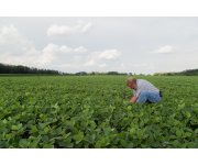 New Calculator Can Help Soybean Farmers with Seed Decisions