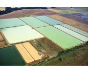 Big Fish in the Pond – From U.S. Soybean Fields to Global Aquaculture