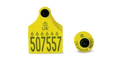 Senior Primary - Button Secondary Cattle Tag