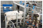 EASYFIX - Model MG Max 4 - Milking Parlours