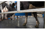 EASYFIX - Model MG Max 8 - Milking Parlours