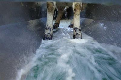 Hydro-Flush Sheep Footbath