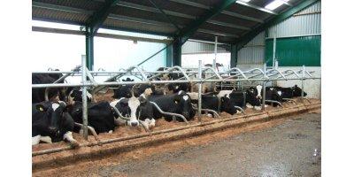 Dairy Housing