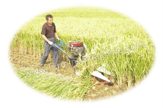 Paddy Reaper Harvester