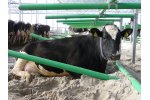 Agromatic - Cow Welfare Flex Stall