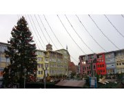European Cities once again look to PEFC-certified forests for their Christmas Trees!