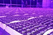 Farming with LED Grow Lights using COB technology