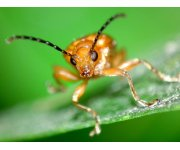 State foresters encouraged by strong state response to Insect & Disease Designation requests