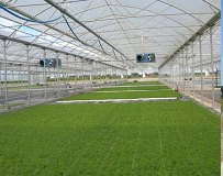 Multi-tunnel Greenhouses