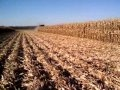 Harvesting Twin Row Corn With Stalk Stompers Video
