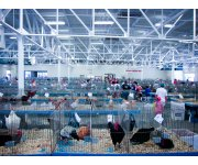 Poultry Industry Recognizes 96 Poultry Facilities for Outstanding Safety Performance