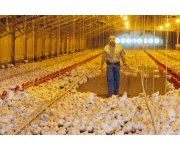 Free Worker Safety Education Program Offered at 2015 IPPE for the Poultry Industry