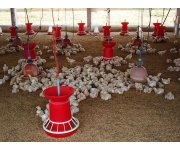 Carbon Footprint and Assessment Tool Developed for Poultry Producers