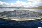 BC SALMON FARMERS Commit $1.5-Million towards Furthering Salmon Research