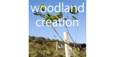 Woodland Creation Services