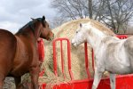 The Horse Hay Bale Conserver Feeder