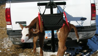 VH MFG - Model HC4000 - Hitch Mounted Calf Carrier