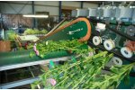 Furora Nova - Automated Grading and Bunching Machines for Cut Flowers
