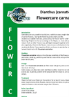 Flowercare - Carnation Dianthus Brochure