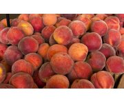 UF/IFAS researcher to growers: Peaches can be profitable in three years