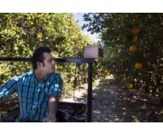 UF researchers develop effective, inexpensive citrus greening detector