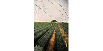 Model Pioneer Series - Commercial Polytunnels