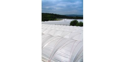 Lumisol Clear - Polythene Tunnel Covers