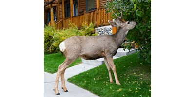 Deer Repellent Devices-2