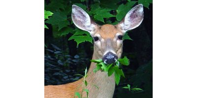 Deer Repellent Devices-3