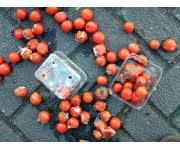 Industry welcomes further dumping investigations into Italian tomatoes