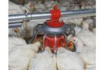 Chore-Time - Broiler Feeding System