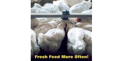 Pullet  - Feeding Systems
