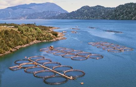 Chile Mandates Real-time Environmental Monitoring at Salmon Farms