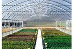 ATLANTIC  - Model TS  - Single Span Greenhouses