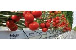 Grotop Master - Products for Vegetable Growers