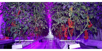 Indoor Farming LED Light