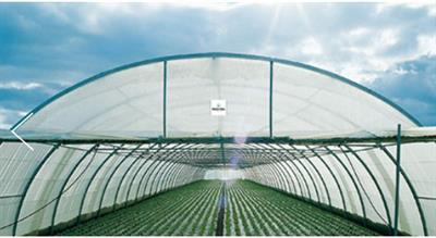 Richel - Multi Tunnel Greenhouses