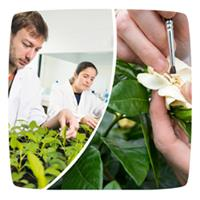 Plant Breeding Services
