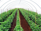 Tunnel - Model 600 - Protect Outdoor Crops