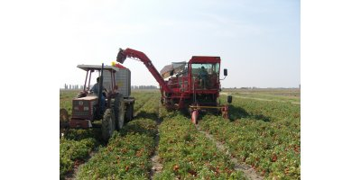 Model GIGA COSMO/45/MS - Tomato Harvest Machine