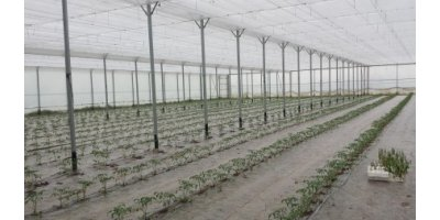 Thermal Screens for Greenhouses