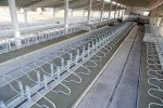 Cubicles for Cattle