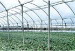 Greenhouses and Tunnels Film Cover